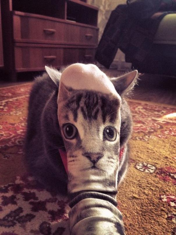 tidy cat breeze system