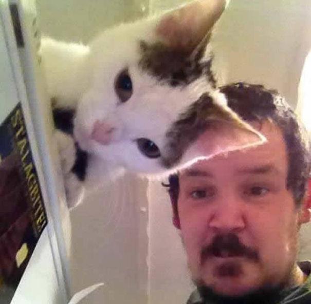 See-Through Cat