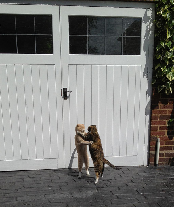 My Friend Found His Cats Ballroom Dancing In His Drive Way