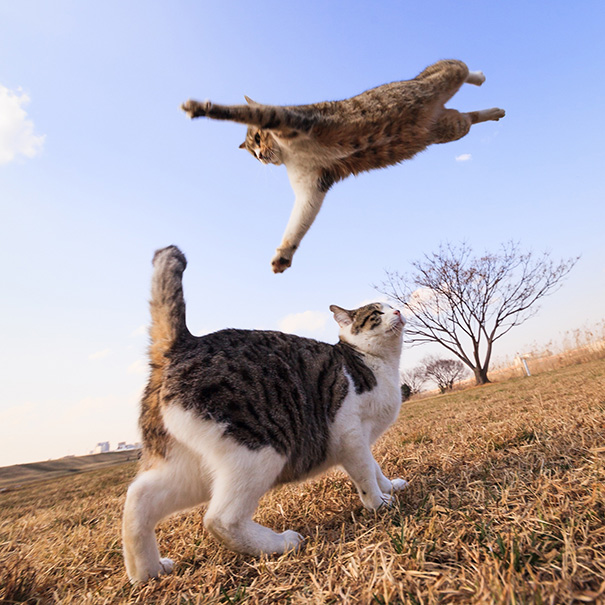 Look Out ! It's A Flying Cat!