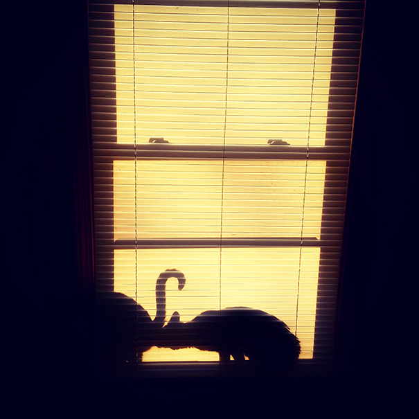 The Cats Decided To Pose For An Artsy-Fartsy Picture This Morning