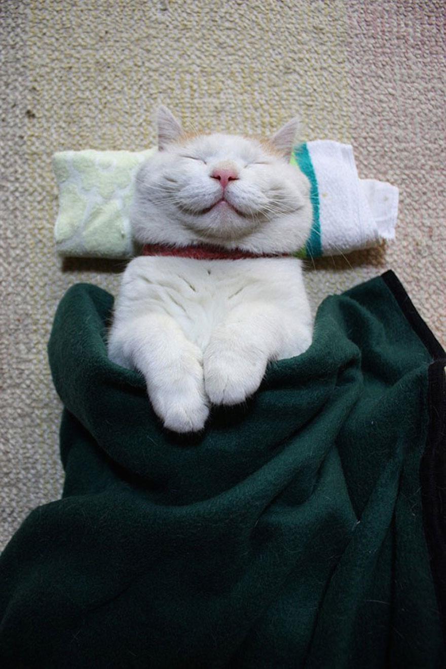 Happiest Cat Ever