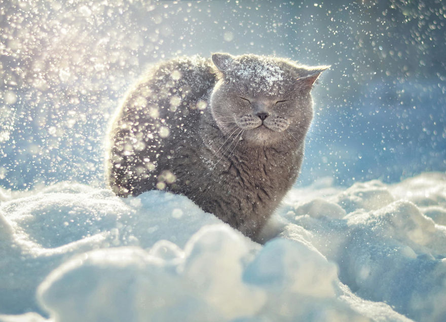 Happy Cat In Snow
