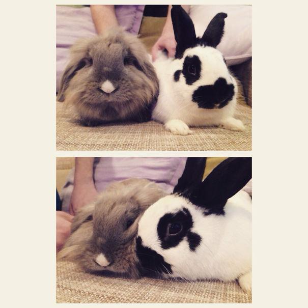 Love Buns