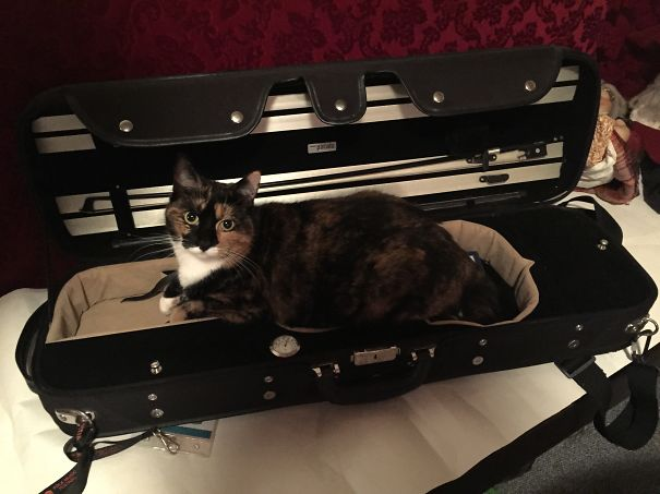 Yes Human, Your Violin Needy Another Home Now.