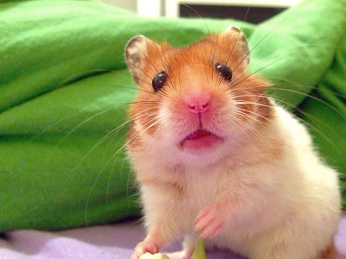 @miguelthehamster
