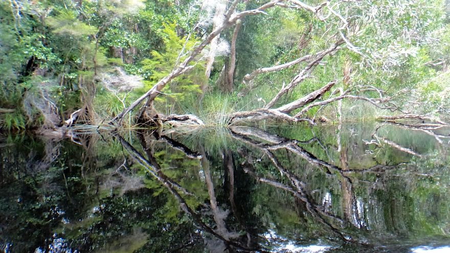 Noosa Everglades, Australia