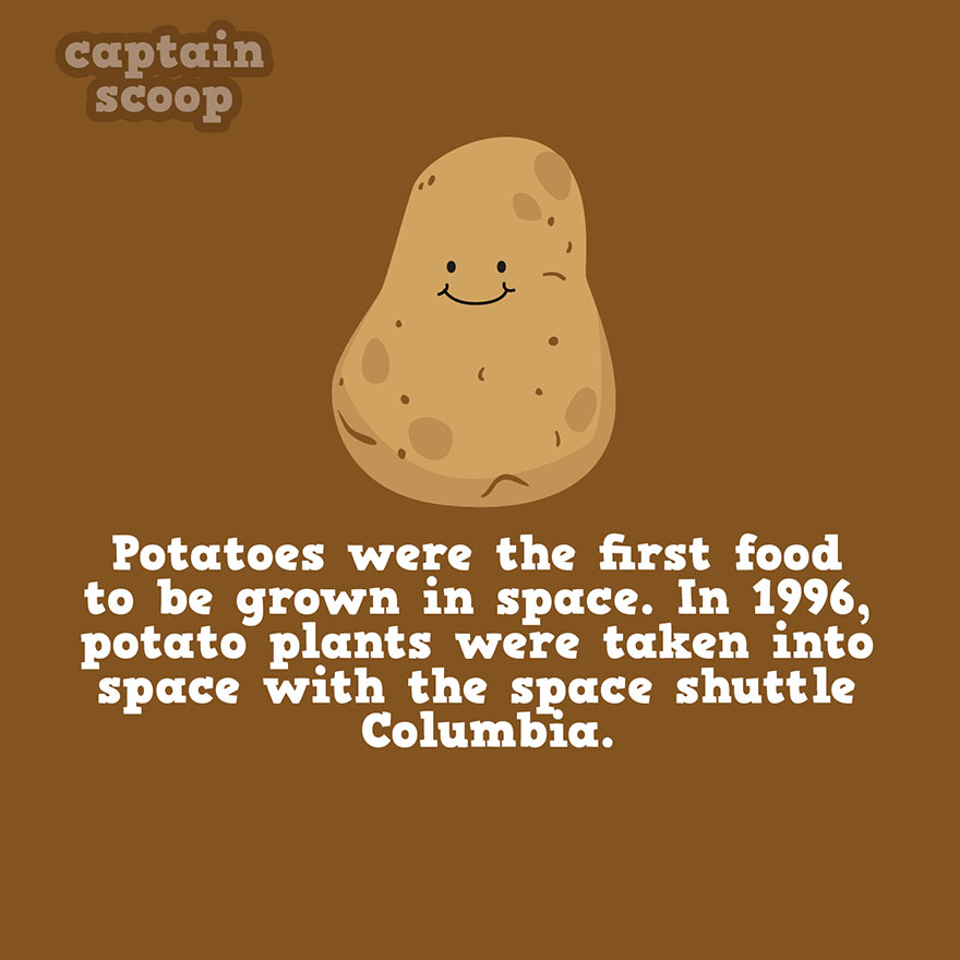 Vegetable Fact