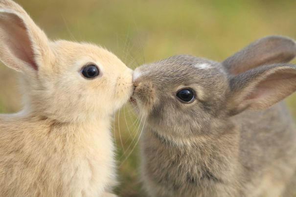 Little Kiss!