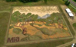 Artist Plants 1.2-Acre Field To Recreate Van Gogh's 1889 Painting 'Olive Trees'