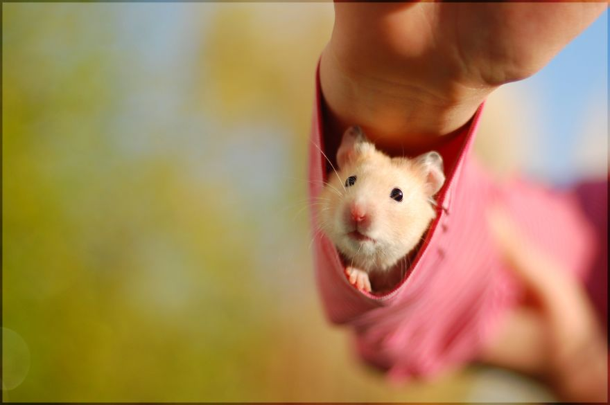 Hamster Under Your Sleeve: Aww