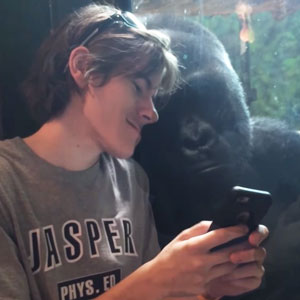 This Gorilla Really Wants To See Your Vacation Pics On Your Phone