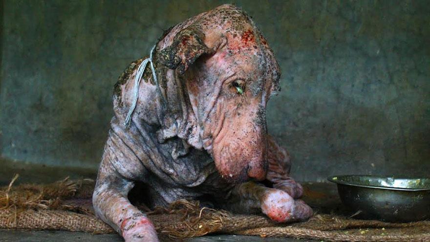 mange-sick-dog-rescue-animal-aid-unlimited-1