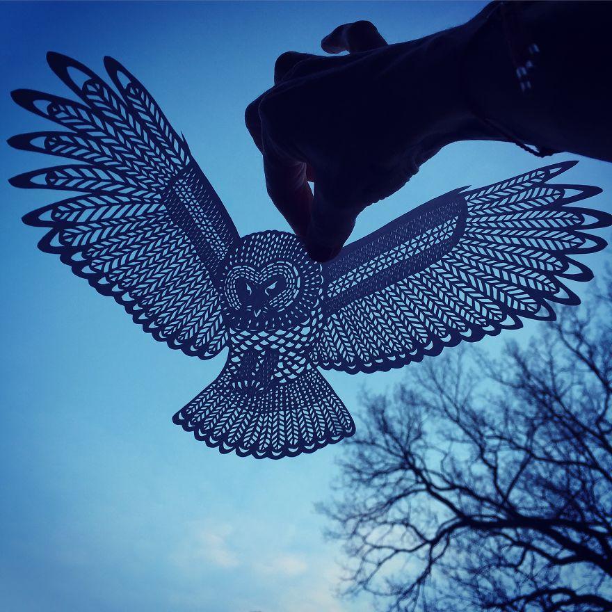 owl__880.jpg