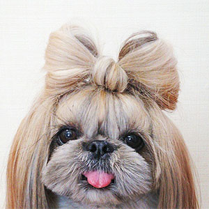 This Derpy Dog Has The Most Fabulous Hair On Instagram