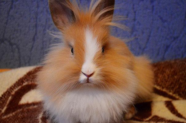 Julius The Bunny