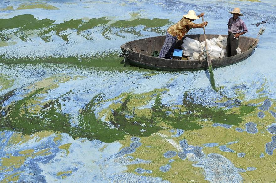 Fishermen Row A Boat In An Algae-filled Lake In China