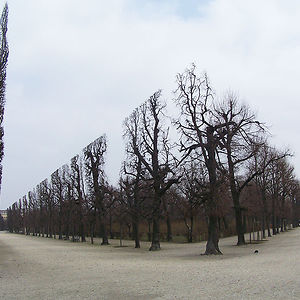 Trees In Schonbrunn Park
