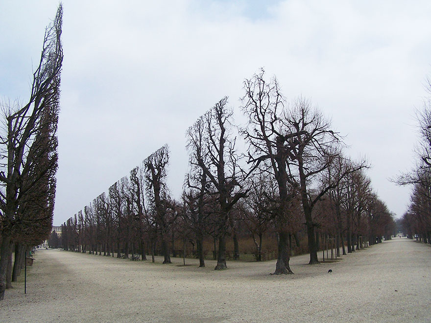 Trees In Schonbrunn Park