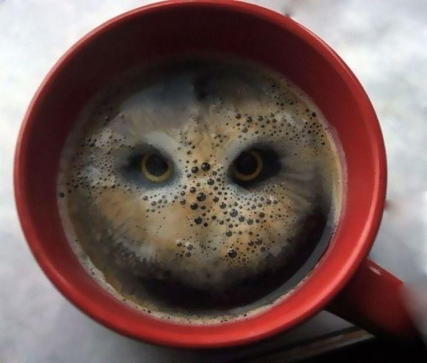 A Guy Dropped A Pair Of Hula Hoops (Potato Snacks) Into Coffee And Saw A Bird