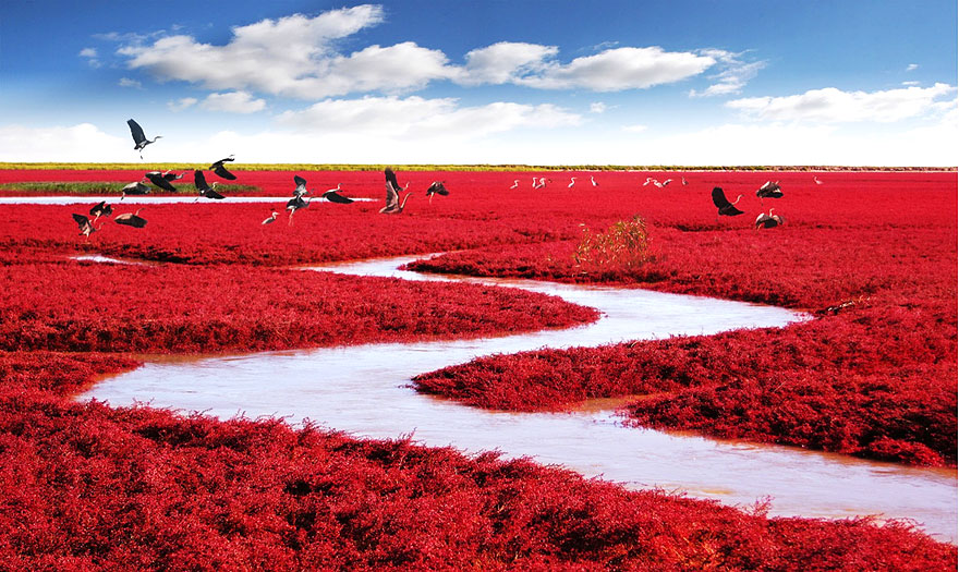 Red Plants In Panjin Beach, China