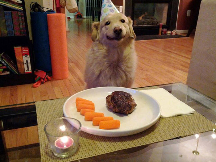 Every Dog Should Be Treated Like This On Its Birthday