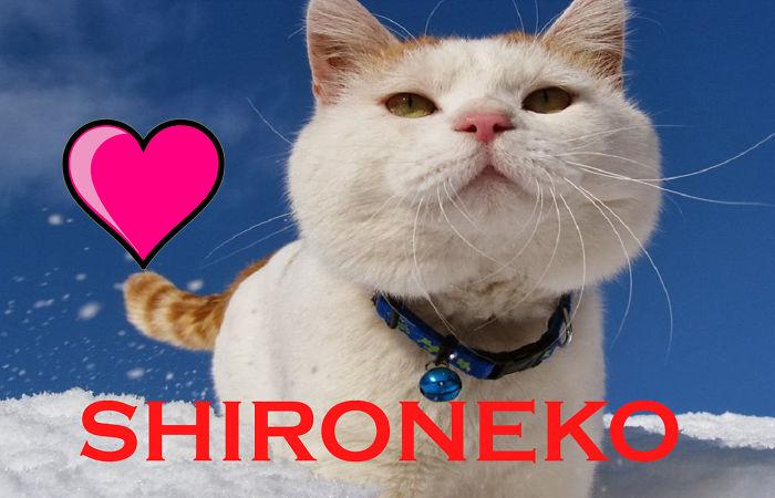 Fat Cat Mat + Fat Cat Shiro | Funny Videos ♥shironeko♥