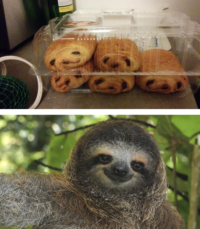 My Chocolate Croissants Look Like Little Sloths