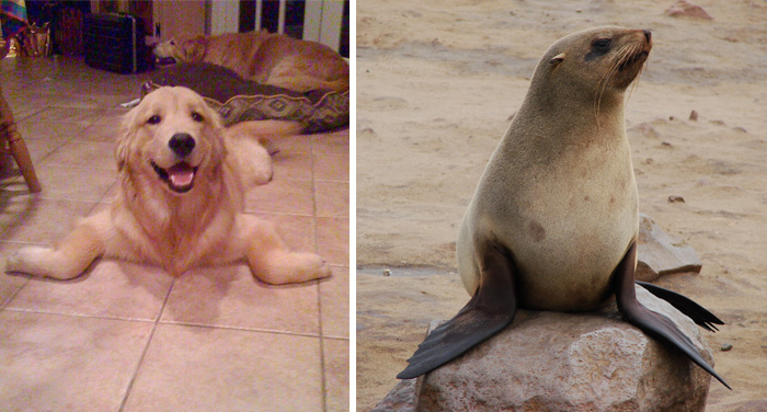 My Friend's Dog Wishes He Was A Seal