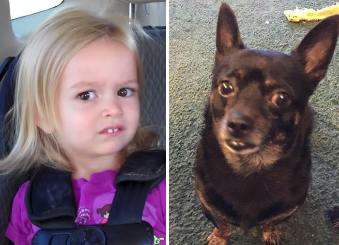 My Aunt's Dog Looks Like Side-Eyeing Chloe