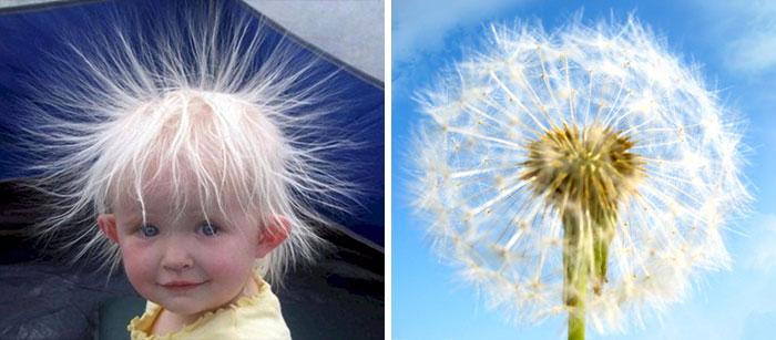 Baby Looks Like A Dandelion