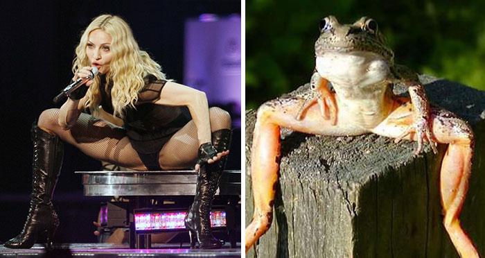 Madonna Looks Like A Frog