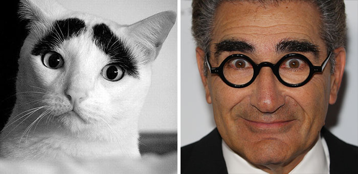 Eugene Levy Looks Like A Cat