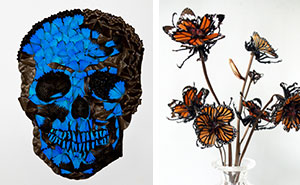 I Create Skull Collages And Flowers Out Of Insects And Spiders