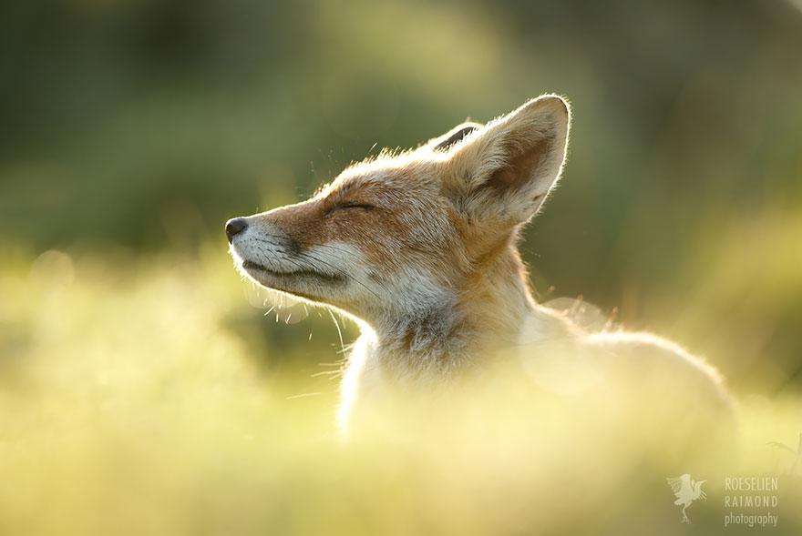 zen-foxes-roeselien-raimond-7__880.jpg