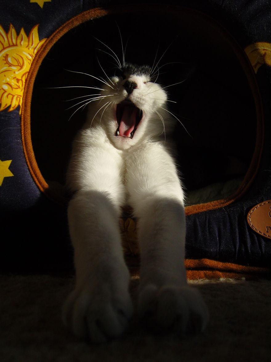 Yawning Morning Smile