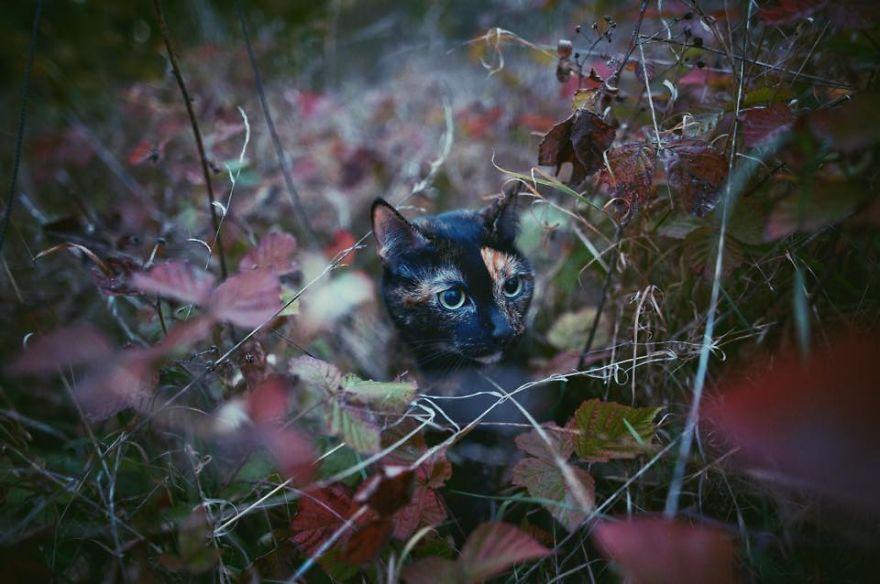 Autumn Cat Effect