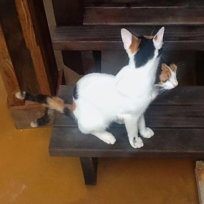 Two-faced Feline.