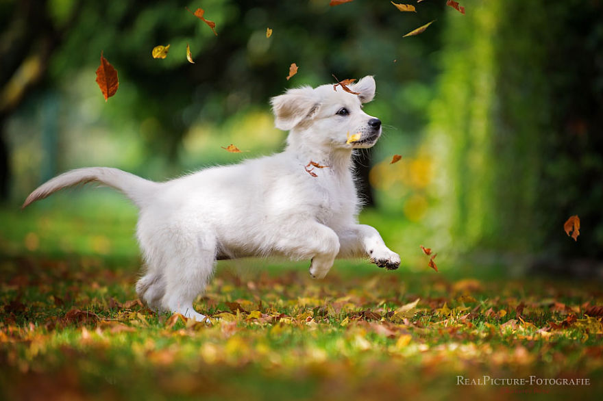 Catching Autumn Leaves