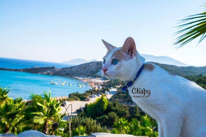 Blue Eyed Cat Strolls Along A Greek Beach