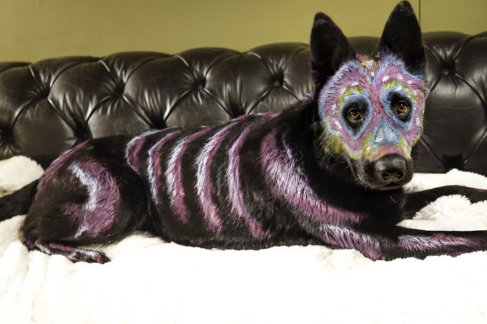 Artist Transforms Her Dog Using Non-toxic Paint