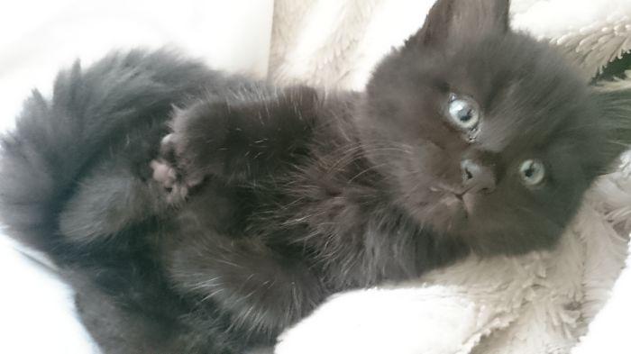 My Kitten – Fluffy