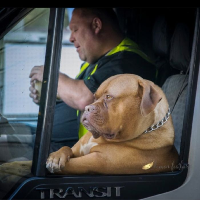Roxy The Dog And Nick Make Deliveries Around London