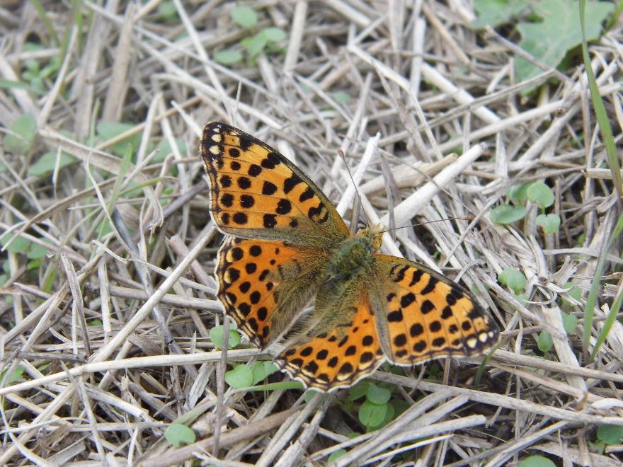 Autumn - Butterfly