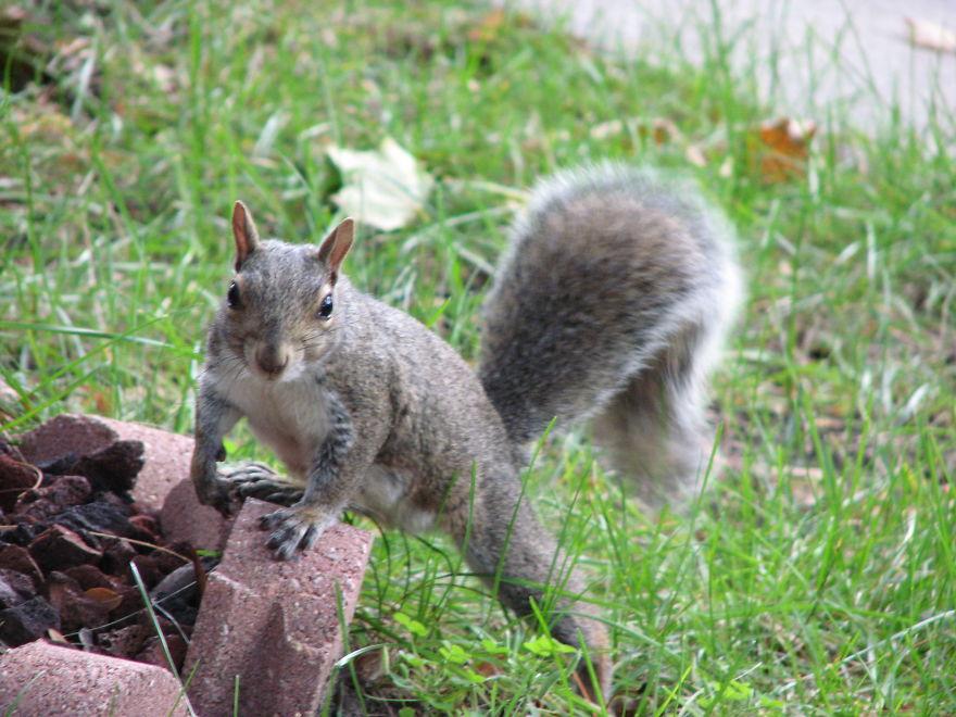 Tiny Squirrel Posing