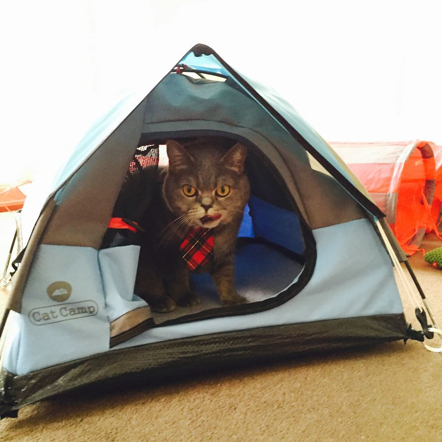 I am prepared and READY FOR ADVENTURE.  sc 1 st  Bored Panda & Tiny Tents For Cats! | Bored Panda