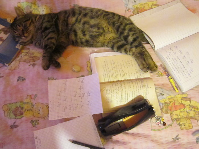 Tired Of Studying