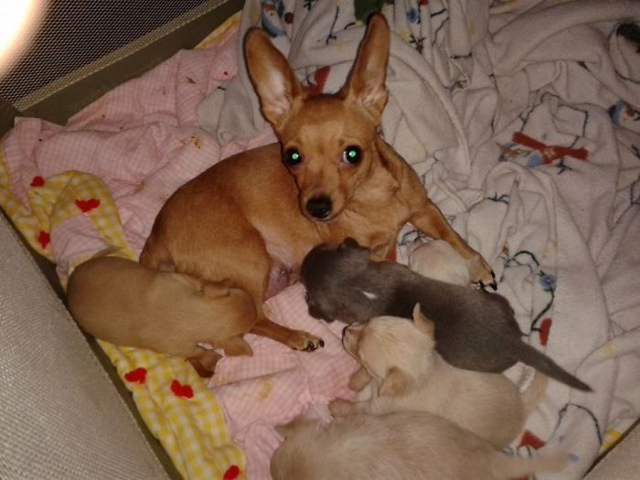 Katee And Her Babies