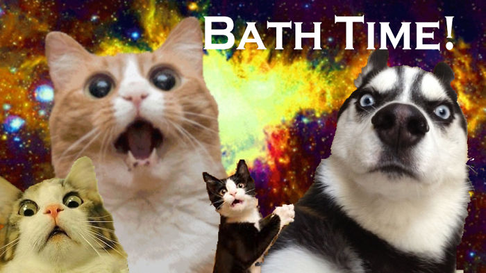 """Pets React To Bathing. When I Say """"bath Time!"""""""