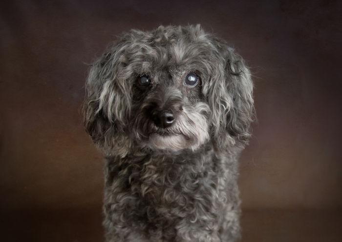 I Photograph Senior Shelter Dogs Who Finally Found Forever Homes